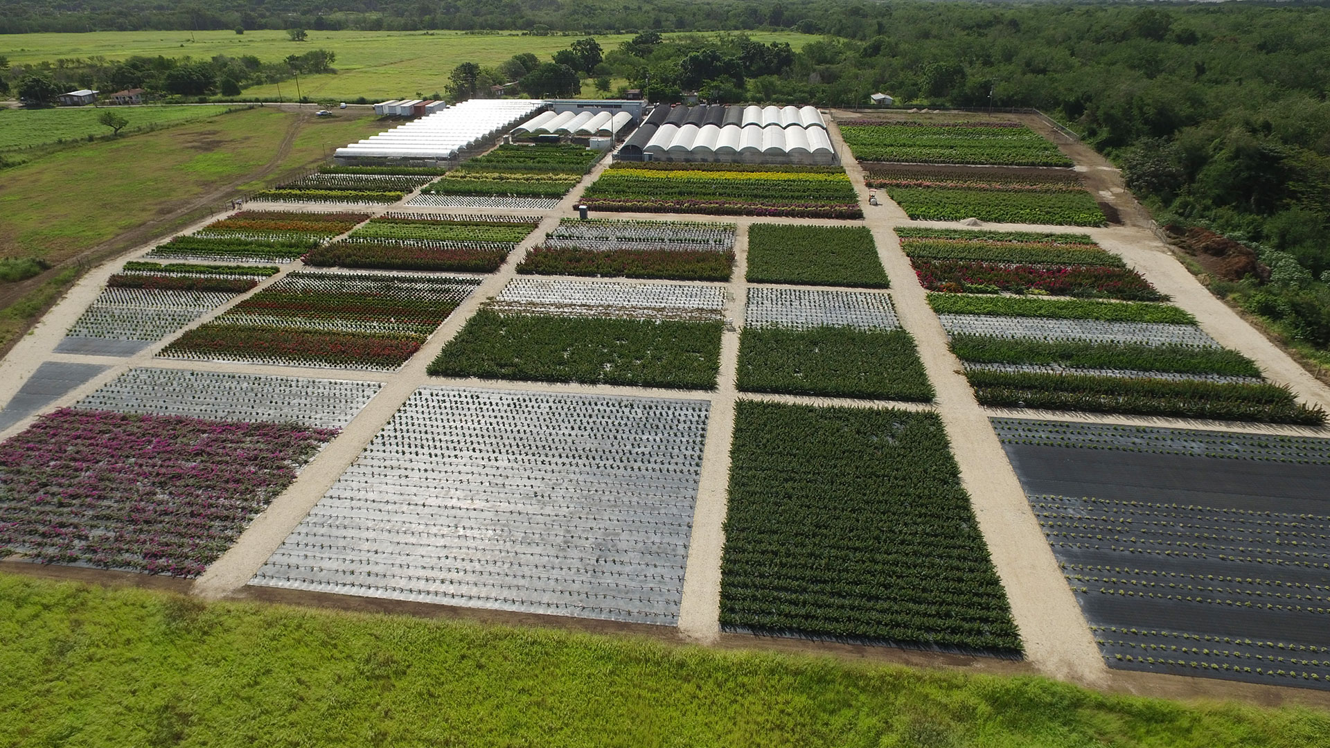 Vista Farms - Bougainvillea, Ixora & Hibiscus wholesale