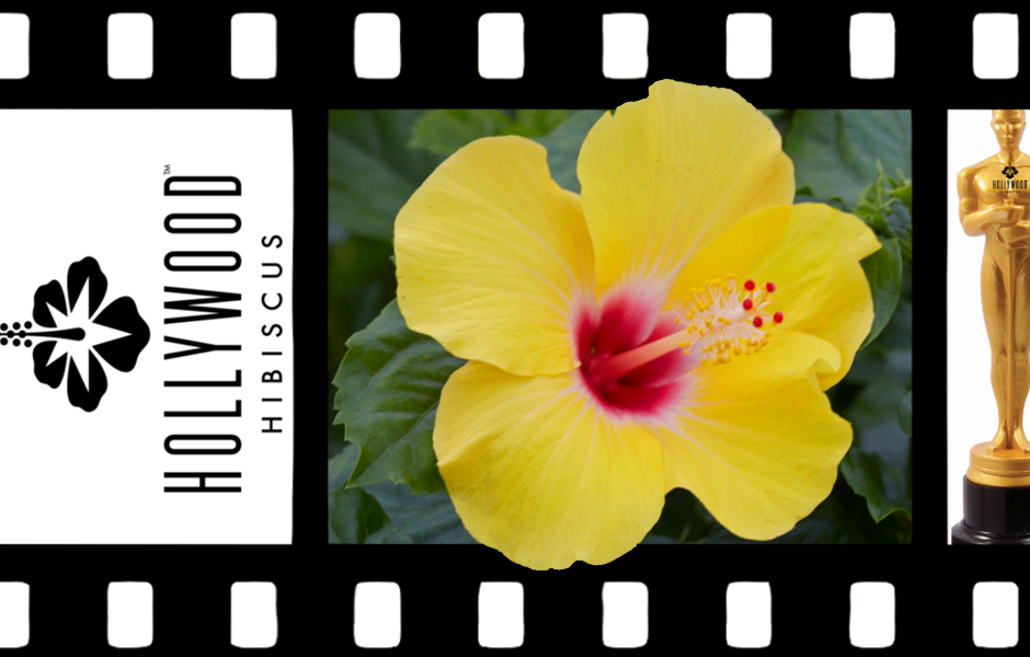Hollywood™ Hibiscus Chatty Cathy