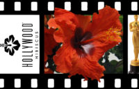 Hollywood™ Hibiscus Firecracker