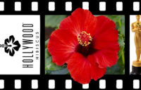 Hollywood™ Hibiscus Hot Shot