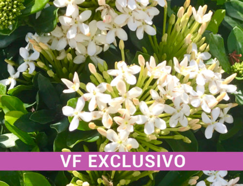 María de Huracán a Flor