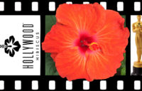Hollywood Hibiscus - Bad Boy