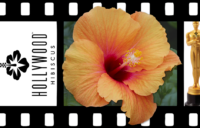 Hollywood Hibiscus - VF - Gossip Queen