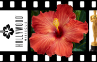 Hollywood Hibiscus - VF - Playboy