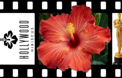 Hollywood Hibiscus - VF - Playboy