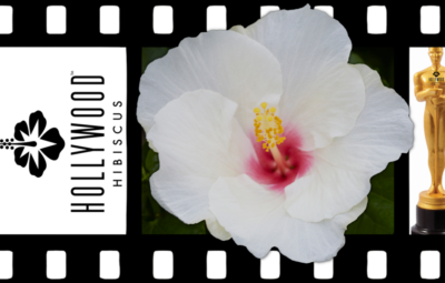 Hollywood Hibiscus - VF - Starstuck